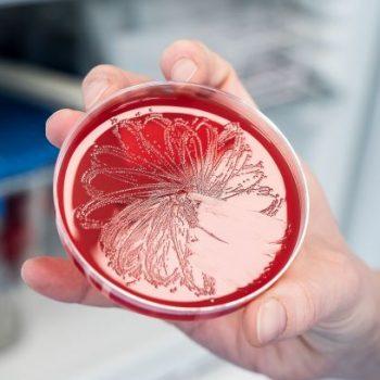 VelaLabs-Microbiology