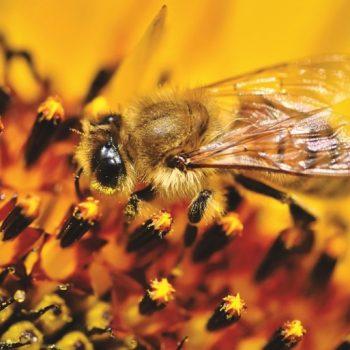 pollenanalysis for monofloral honeys