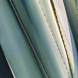 Analysis of agave syrup